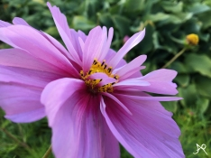 Flora of Keswick
